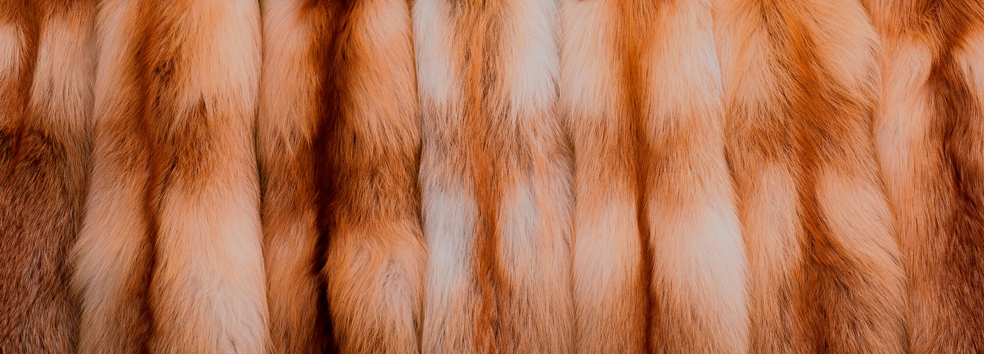Красная лиса от 1800р