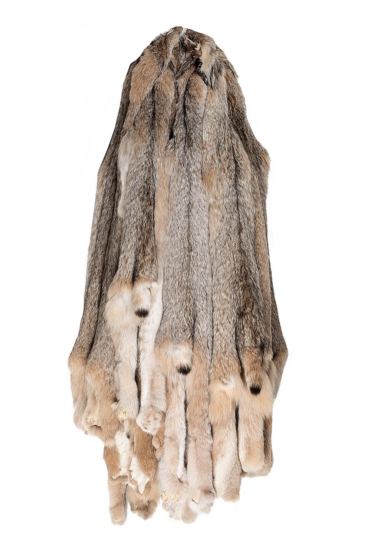 Канадская рысь