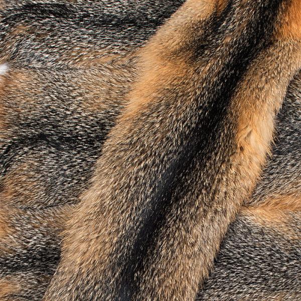Лиса Grey fox