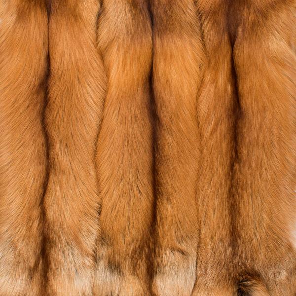 Лиса Red Fox